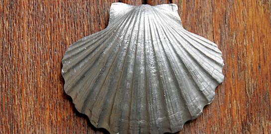concha-de-vieira